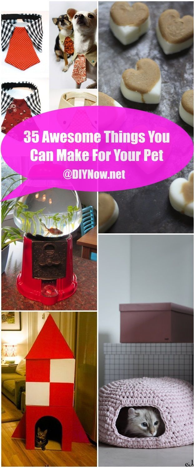 35 Awesome Things You Can Make For Your Pet