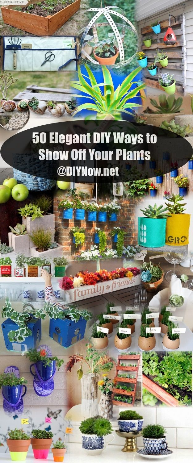 50 Elegant DIY Ways to Show Off Your Plants
