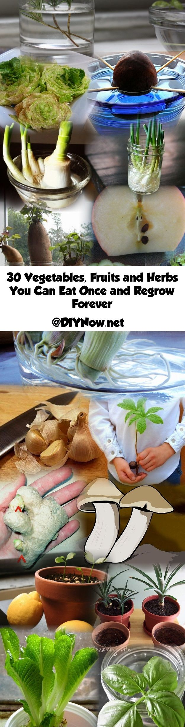 30 Vegetables, Fruits and Herbs You Can Eat Once and Regrow Forever