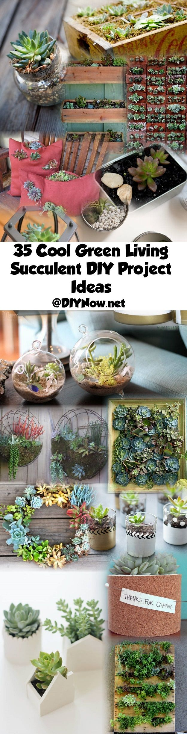 35 Cool Green Living Succulent DIY Project Ideas
