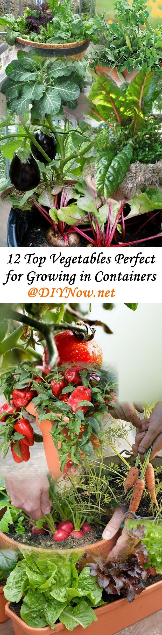 12 Top Vegetables Perfect for Growing in Containers